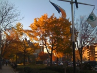 MacDonald Park 111210a